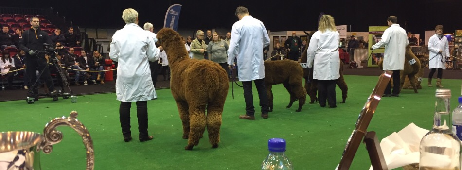 British Alpaca Society National Show 2016